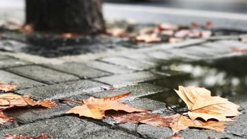 今日冷空气袭入申城 阴有小雨最低6度