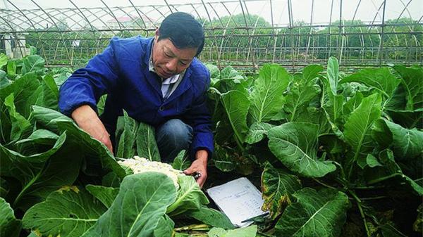 中国梦·申城美 | 黄成超:富了菜农钱袋子 丰了市民菜篮子
