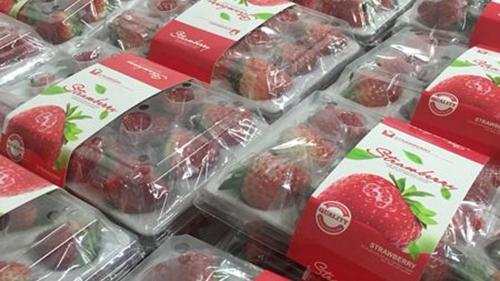 首批地产草莓今起上市 专家揭秘草莓畸形果成因