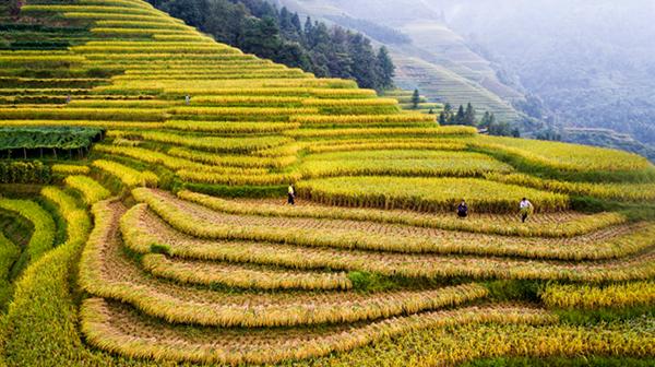 中国南方稻作梯田等4项目将成全球重要农业文化遗产
