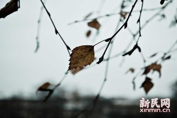 晨读|枯叶与麦子