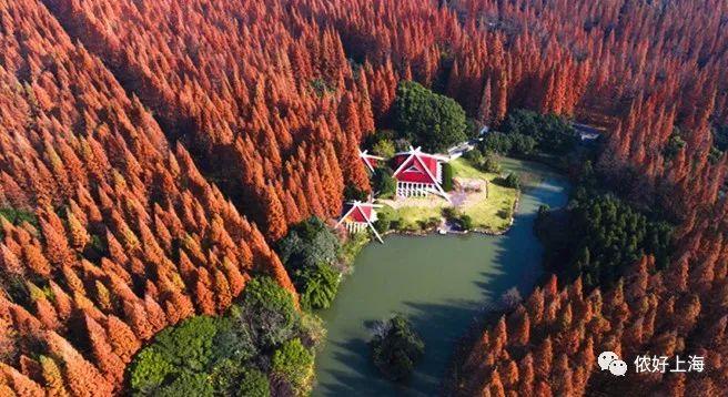 惊艳!上海的秋冬已经美成了明信片里的样子!