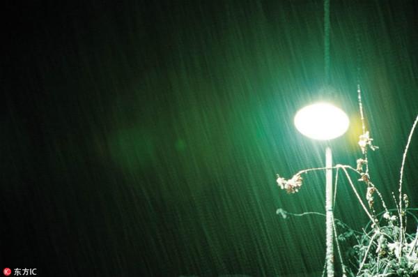 科学家发现让植物发光方法:将来或能取代路灯台灯
