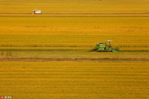 23省市出台重点群体增收计划 新型职业农民在列
