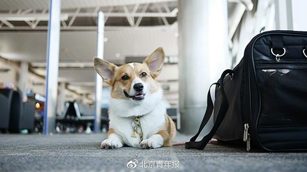 海航允许携带宠物进入客舱 每人最多1只每航班最多2只