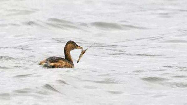 星愿公园发现80多种鸟类 冬季游园感受别样生机
