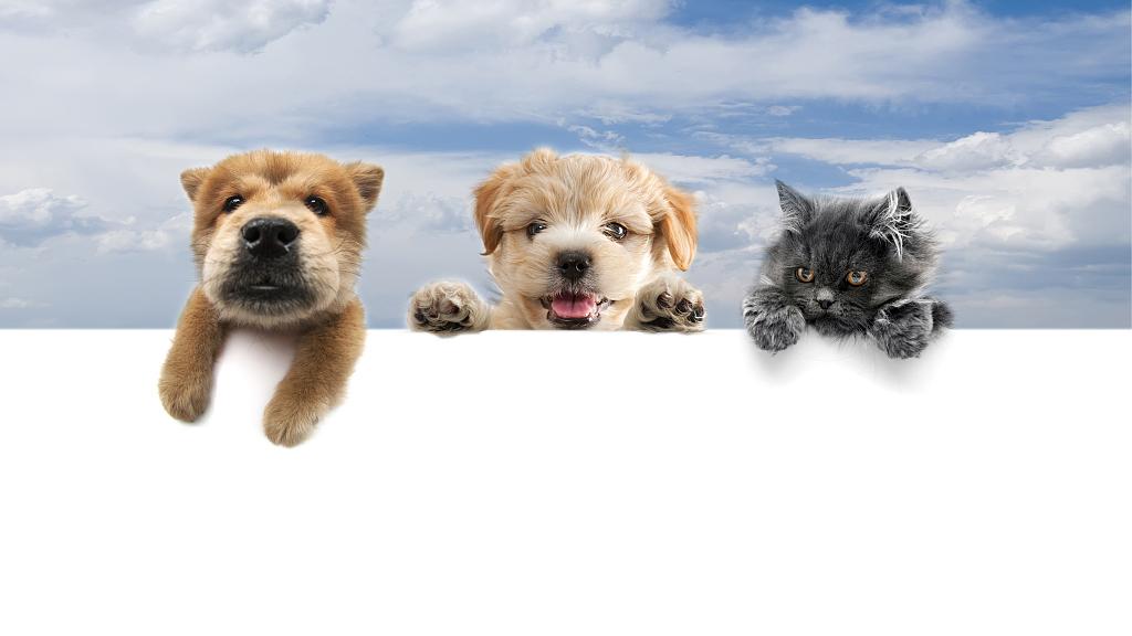 海南航空成境内航司破例者 小型猫狗可随主人乘飞机