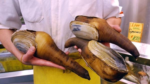 加拿大活象拔蚌连续检出麻痹性贝类毒素 沪通报进口商品15个不合格案例