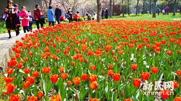 雕塑公园赏花