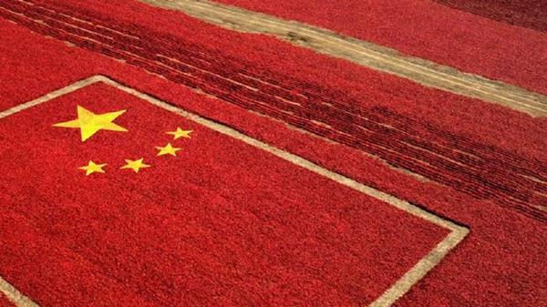 """""""跑多次""""变""""只跑一次"""",上海推行新办企业涉税事项当天办结服务"""