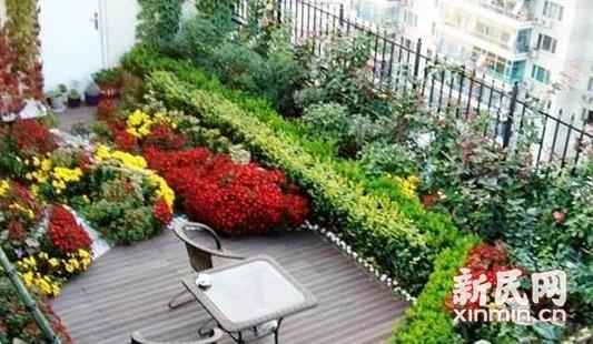 晨读 | 阳台小花园,送给陌生人的美好