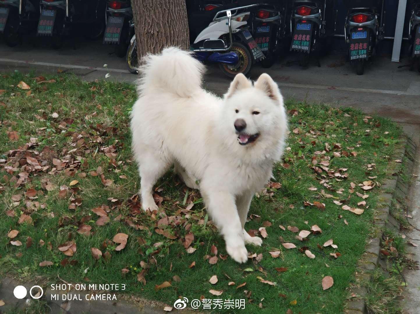 全上海紧急寻人!你再不来,警察蜀黍可能要破产啦!