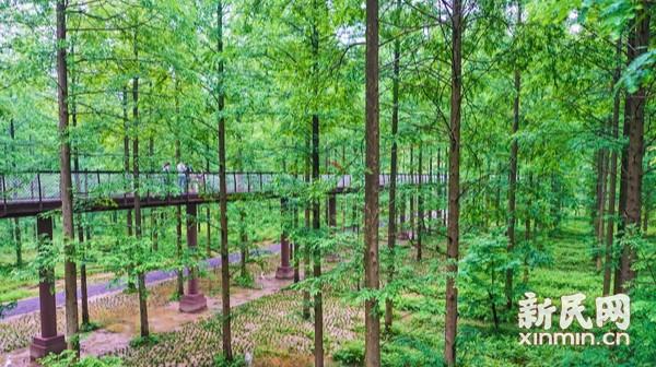 到森林中去吸氧