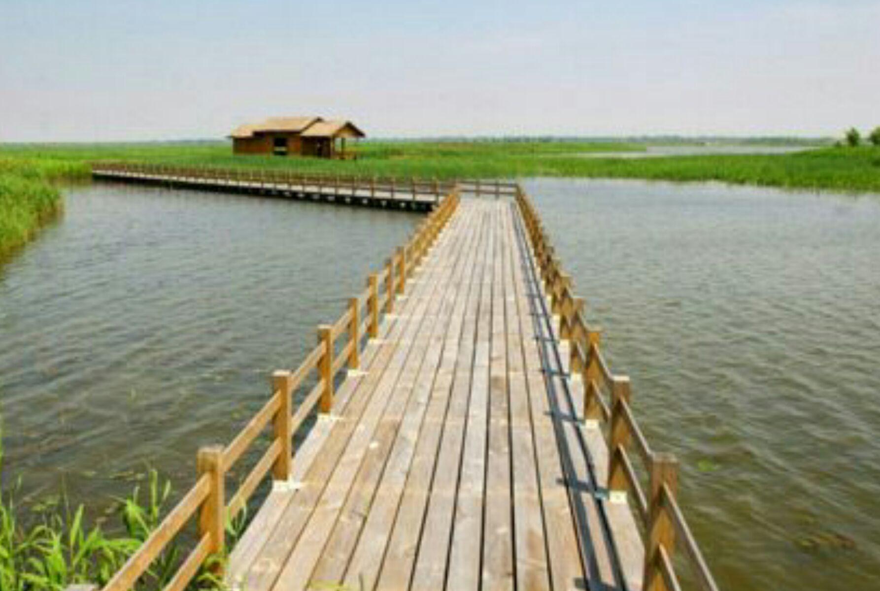 候鸟的天堂丨走进杭州湾国家湿地公园感受生态自然之美!
