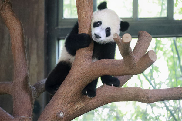 上海野生动物园开启小动物欢乐节 20余种动物宝宝集体