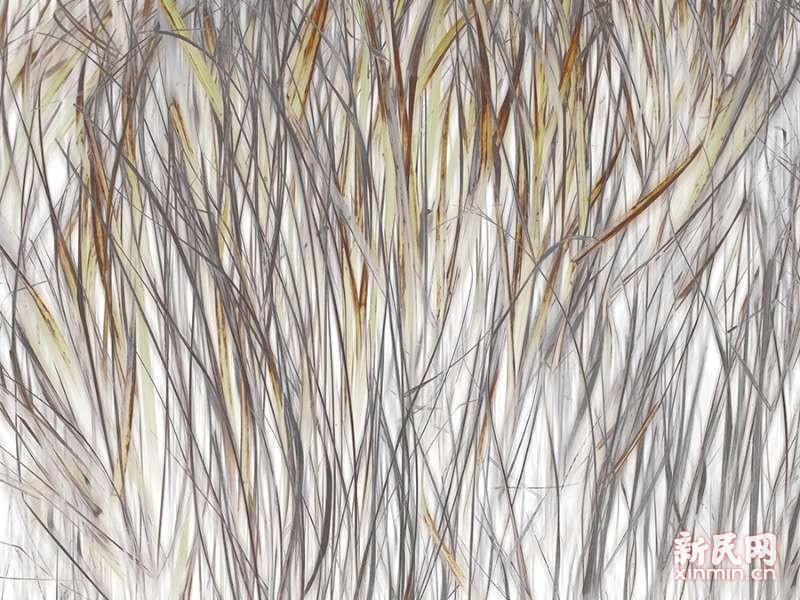 池海波:大自然的捕影艺术家