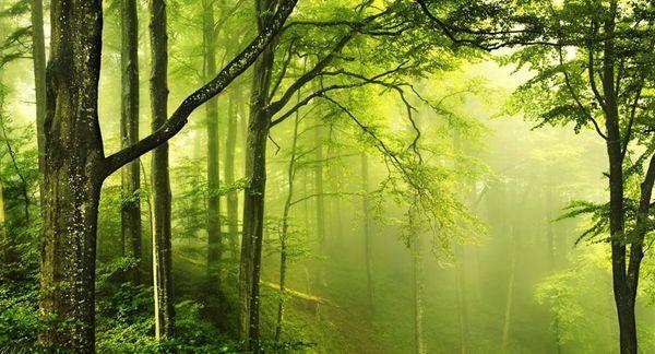晨读 | 树是天地书
