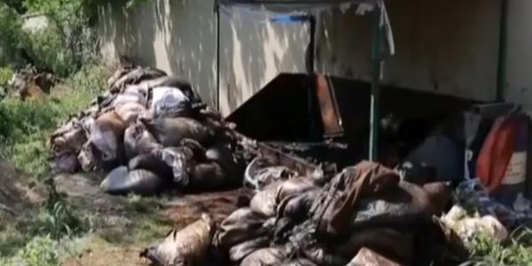 江苏破获偷排危化品船舶洗舱水污染长江案,江滩大片植被死亡