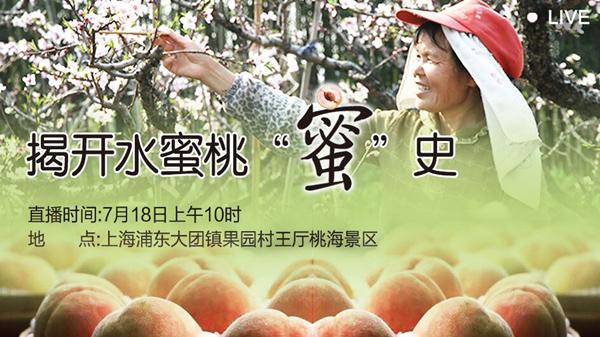 直播预告 | 7月18日上午10时 盛夏桃园硕果累 来大团摘桃品桃知桃史吧!