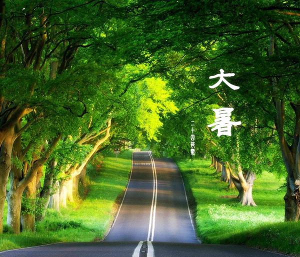 晨读 | 今日大暑:莲花生香,夏正浓