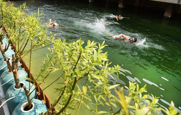 昔日臭河浜办起游泳比赛 这群人真敢往下跳