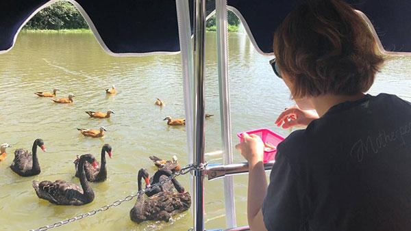 """上海野生动物园""""水域探秘""""航线启动 隔岸观鸟看动物"""