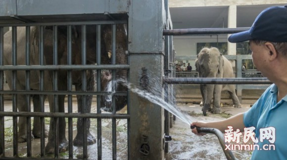 上海动物园 动物避暑妙趣多