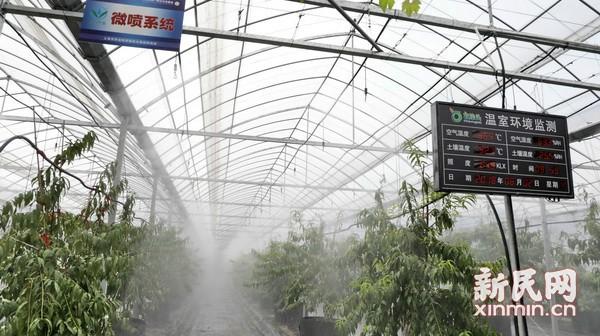 高效节水灌溉在沪推广