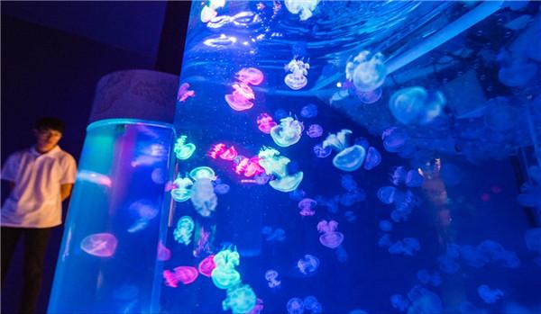 水母、海葵、鹦鹉螺 这个展带你畅游海底两万里!