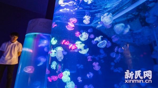 《光影海洋》艺术展开幕 沉浸式艺术展带你畅游海底两万里