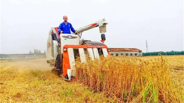 生逢1978,我的故事 | 李春风:城里工作十年的他回松江务农,如今成了打理420亩土地的农场主