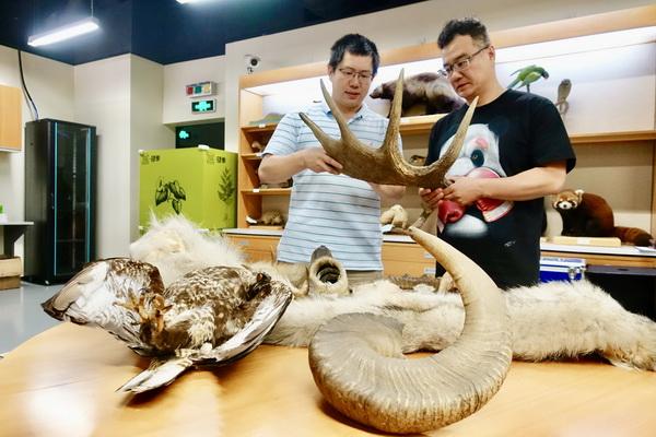 上海自然博物馆接受10件市民捐赠自然类标本