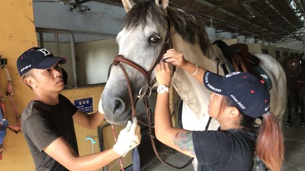 别关注骑马网红了,来看看在上海养马的正确打开方式