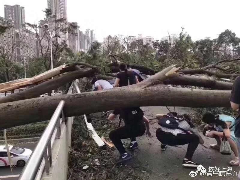 台风过后,已经没什么能阻止他们去上班了!
