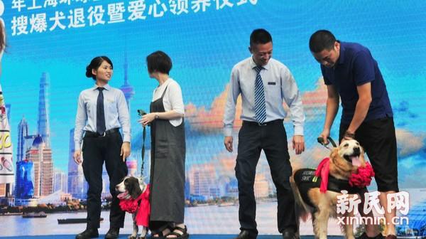 爱心领养退役犬