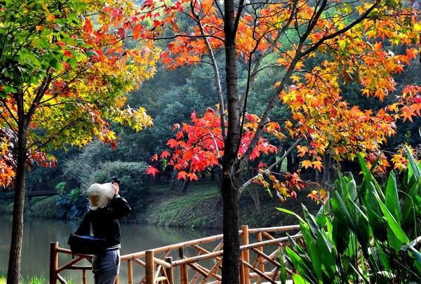 色叶树变色 醉美的秋色来了