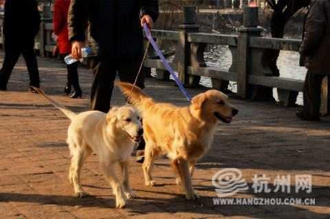 杭州犬类免疫点爆仓:日接种800只 大多是首次办证