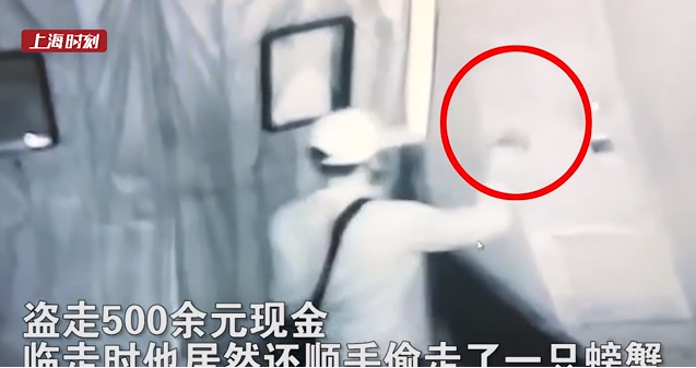 """视频   小偷入室盗窃 还顺手""""拿""""了一只螃蟹……"""