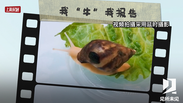 上海时刻·见所未见|六年级娃最IN萌宠竟是它!