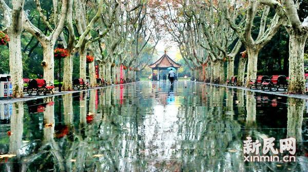 """雨水中迎来""""降温""""申城速冻模式将开启"""