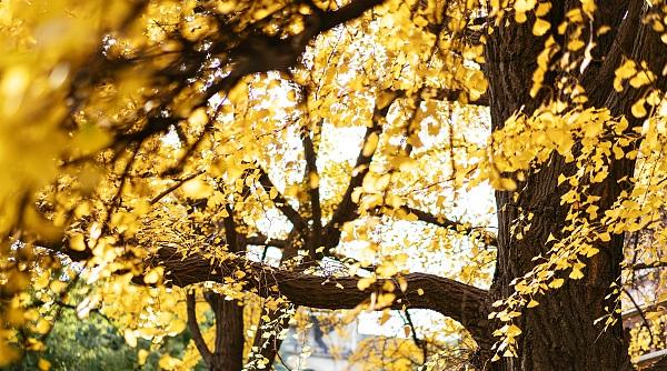 见所未见|涨姿势!观叶认识上海的树