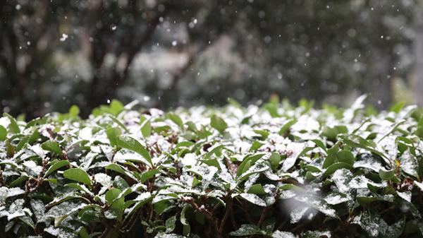视频|上海时刻·雪舞的时光