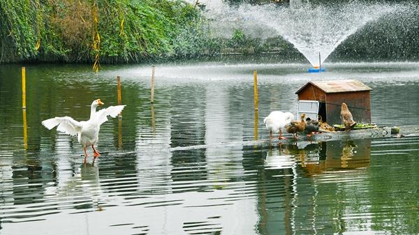 上海今天延续阴雨最高温8℃ 双休日气温回落