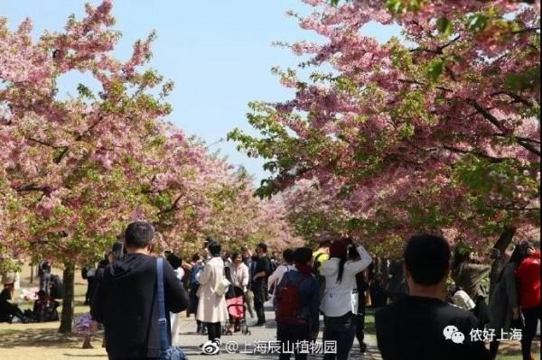 热热热!上海明天最高温度24度!