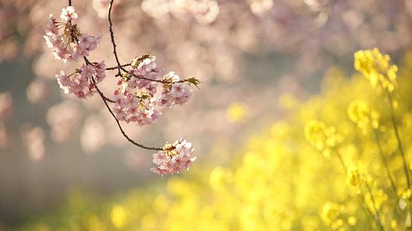 """春姑娘有""""小情绪""""了,今日""""春分""""降温7°C+下午有小雨"""