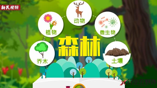 行走在野外11 今天是国际森林日 上海的森林面积你绝对想不到!