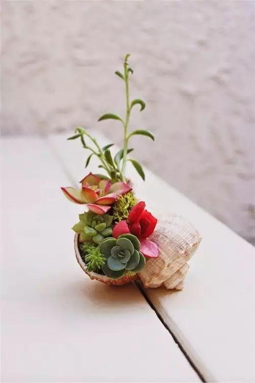 他养的花从来不买花盆,一样美爆了!