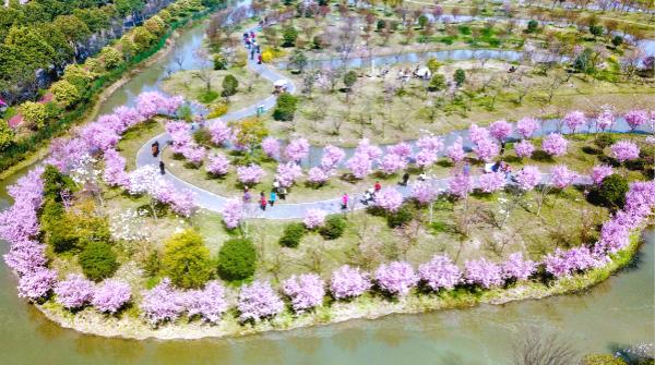 上海时刻·乡愁|桃夭夭,梨似雪,海棠吐蕊樱花漫,上海这里有百花