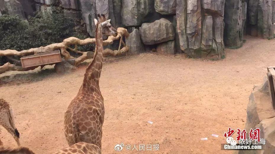 有人投人民币喂长颈鹿?工作人员捡回近万元!
