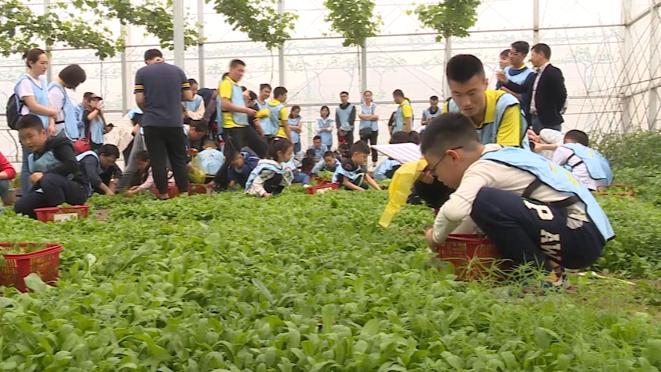 上海时刻·乡愁|春在溪头荠菜花,看田头荠菜变馄饨出锅